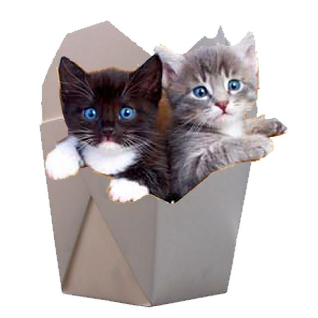 wpc_cat_in_the_box.jpg