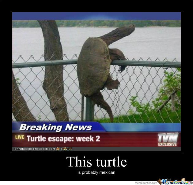 escaping-turtle_o_502281.jpg