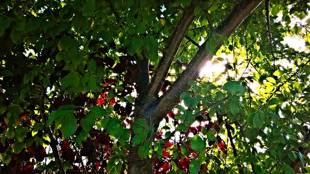 sunkissed-tree.jpg