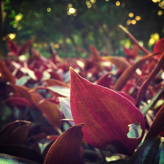 crimson-leaves.jpg