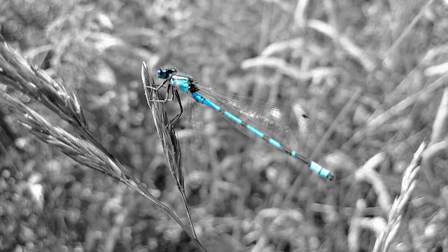 abstractkiller-dragonfly-colourpop-nottinghamshire-lumia-920.jpg