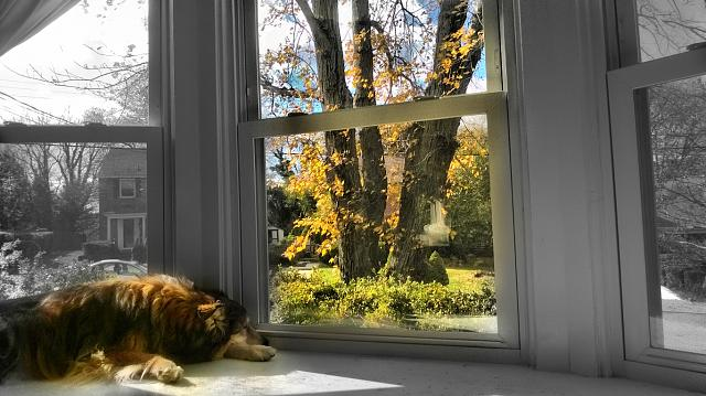 11-7-14-autumn-window.jpg