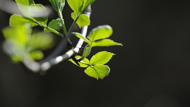 branches_leaves_shape_green_17460_2025x1139.jpg